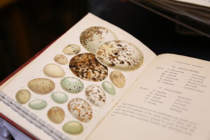 British Birds' Eggs and Nests, Popularly Described, by J C Atkinson (1862)