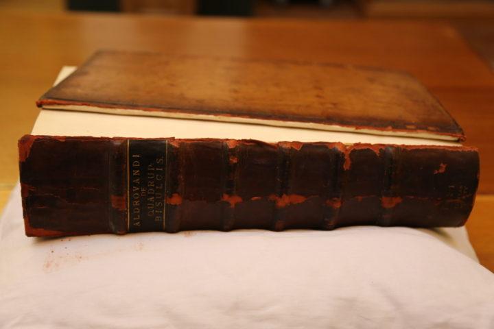 Aldrovandi before conservation, spine