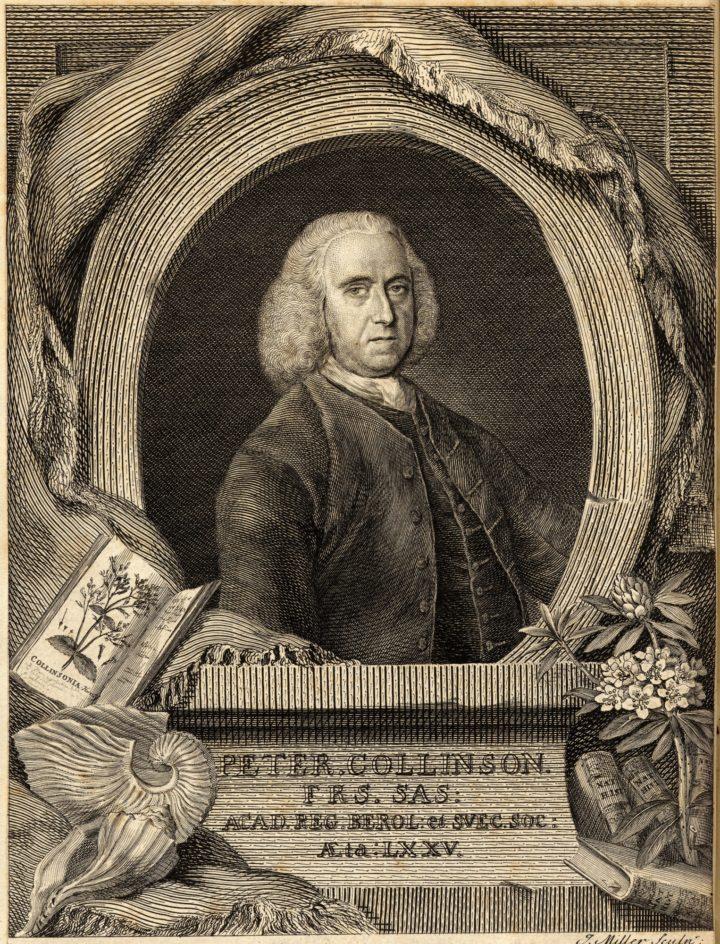 Peter Collinson