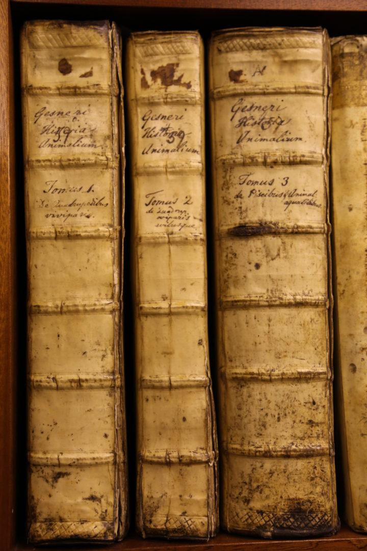 Spines of Gessner Historiae Animalium