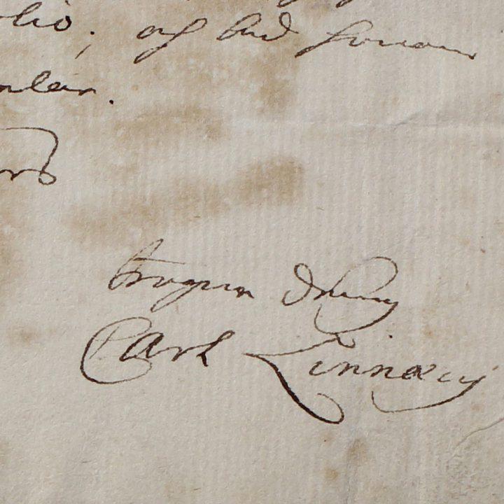 Linnaeus signature and seal