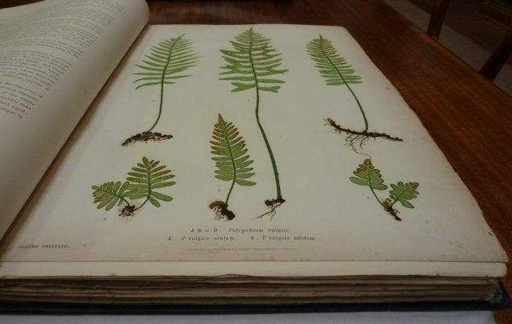 Ferns of Great Britain