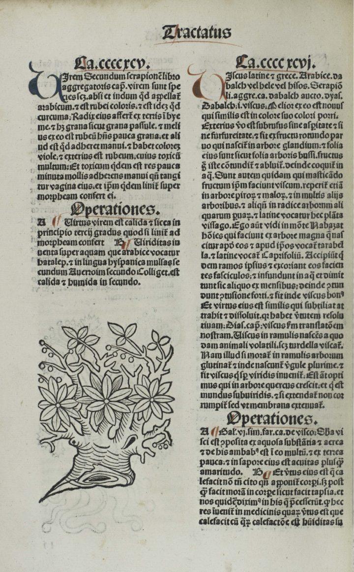 Ortus Sanitatis