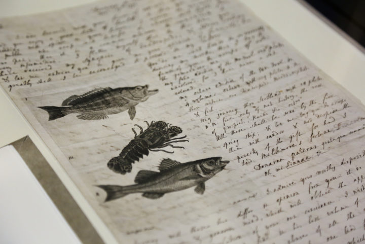Letter to Linnaeus
