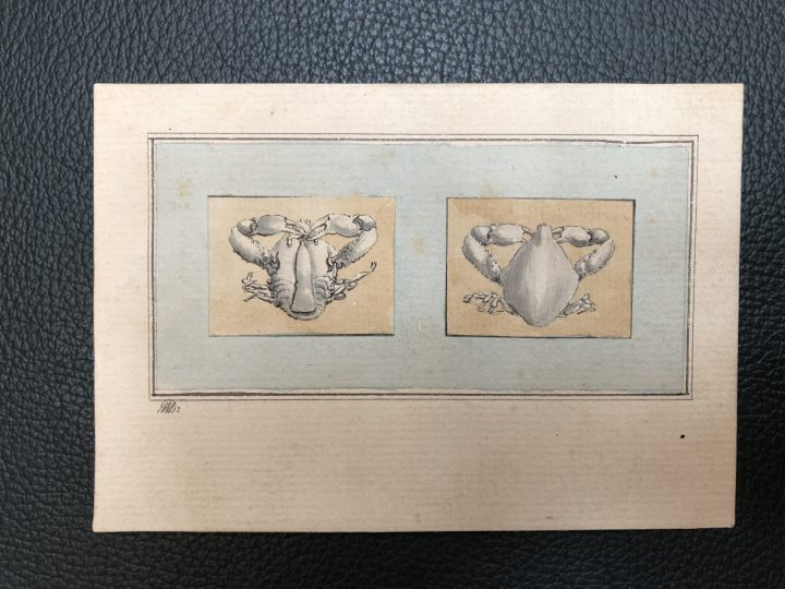 George Wilson's drawings of Indian Crabs (SPNH/6/1 – item 34)