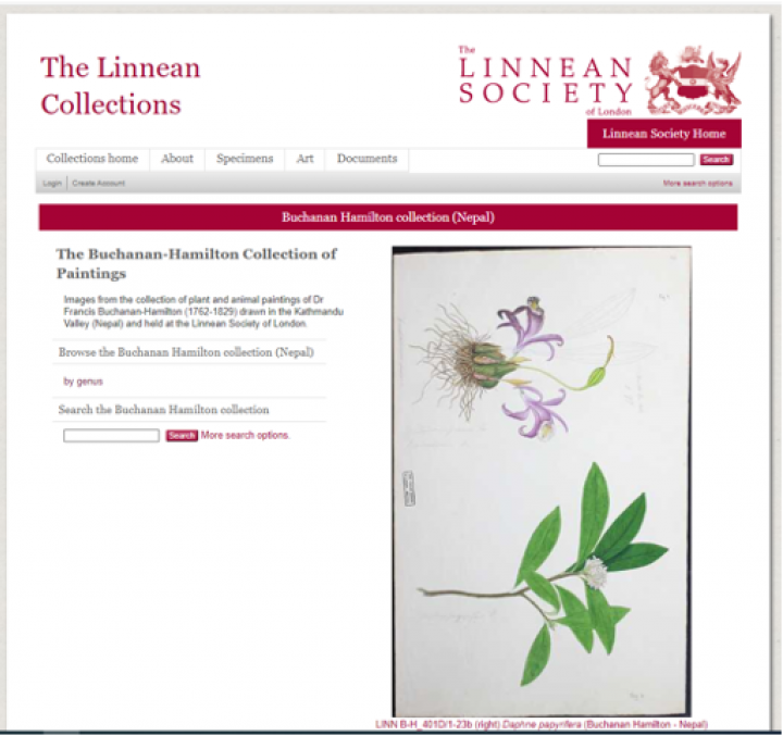 Online Collections page: Buchanan-Hamilton drawings