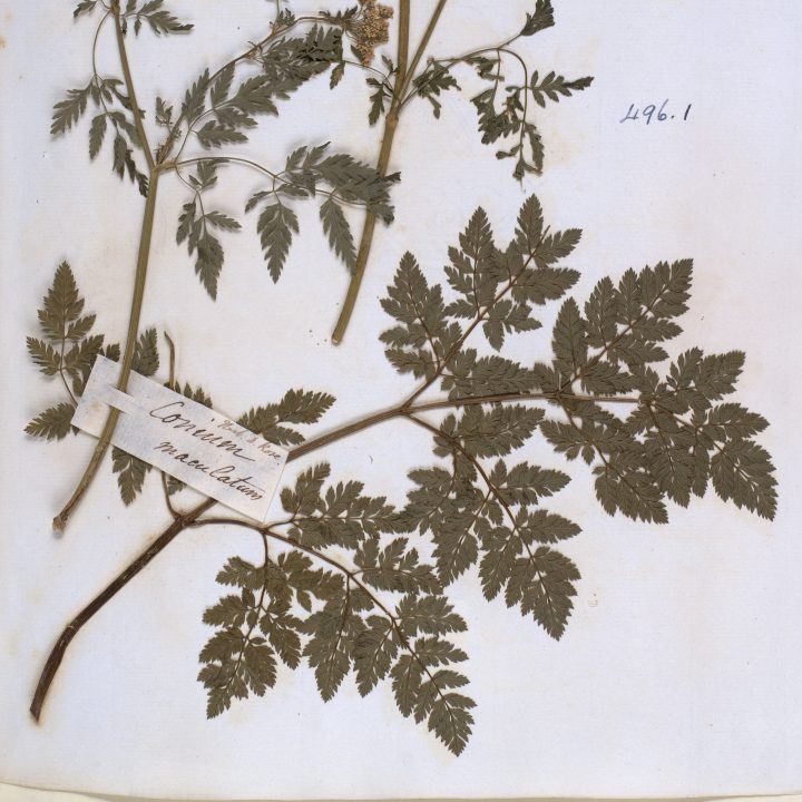 Smith Herbarium