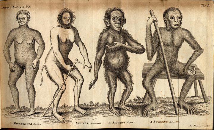 Linnaeus, Anthropomorpha