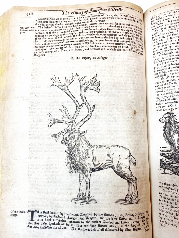 Reindeer from Topsell's 'Four-footed beasts and serpents'
