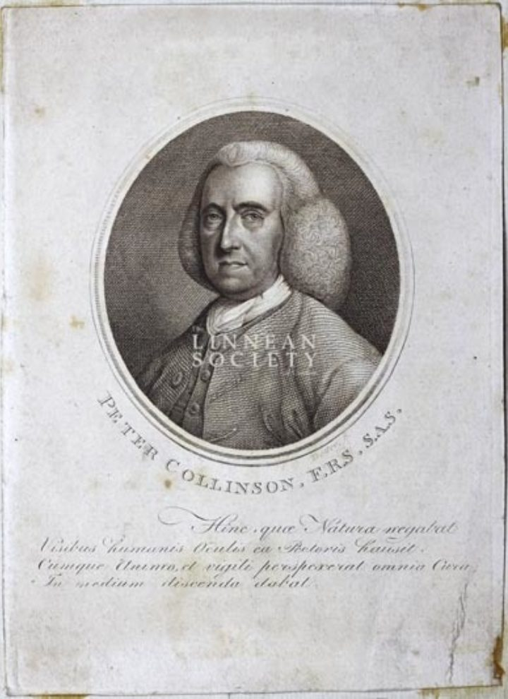Engraving of Collinson in middle age, from the Society's portrait collection (EP/C/59)