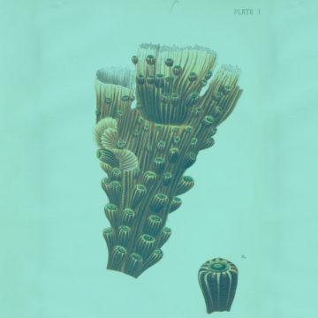#16: The Coral Reef Heroes