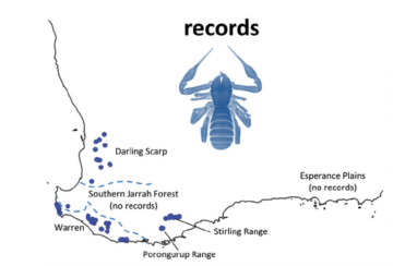 A changing climate will impact diversification processes in ancient pseudoscorpions in SW Australia