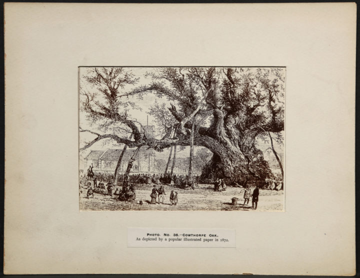 An illustration depicting the Cowthorpe Oak. A large crowd of people are standing and dancing under an outstretched branch of the tree.