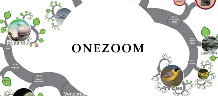 OneZoo