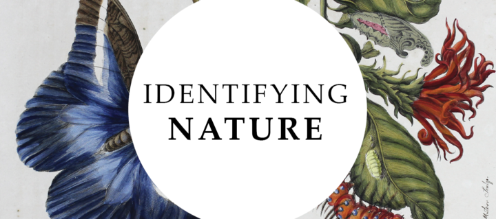 Identifying Nature