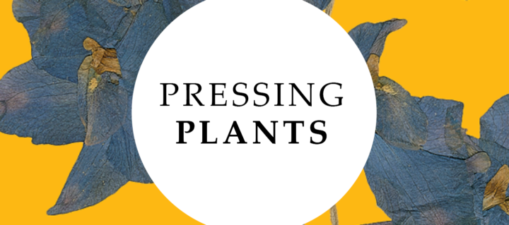 Pressing Plants