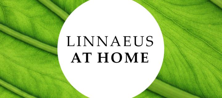 Linnaeus at Home