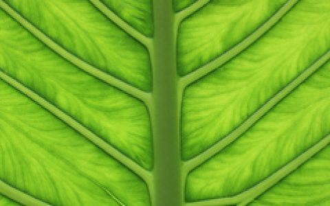 Plant Blindness: How to put plants back in the picture