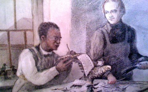 The Man who taught Charles Darwin Taxidermy