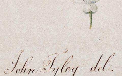 Hidden Treasures: In Search of John Tyley