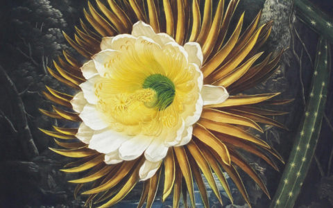 Cereus: A Blooming Obsession