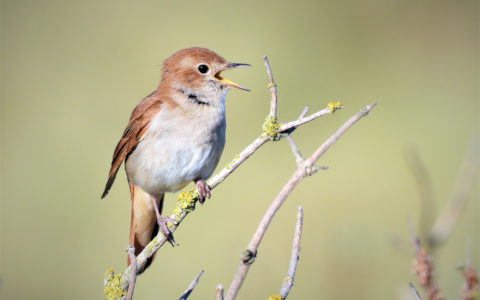 Birds and Music: A Violinist's View