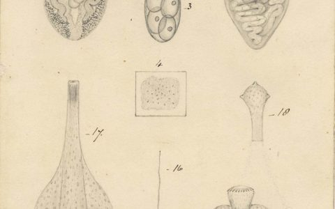 Thomas Spencer Cobbold's drawings of the hidden lives of parasites