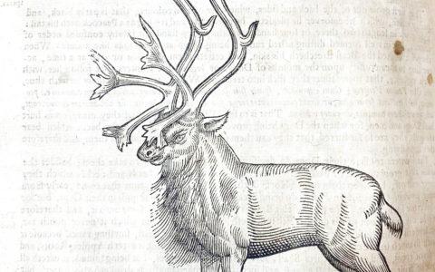 Edward Topsell's Reindeer