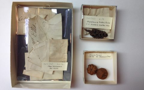 Conserving the Carpological Collection