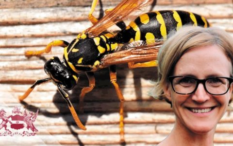 Why the World Should be Harnessing the Predatory Power of Wasps