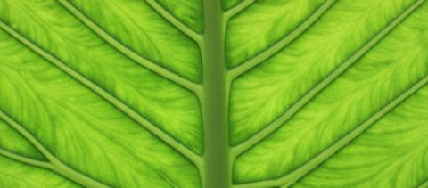Beyond Plant Blindness