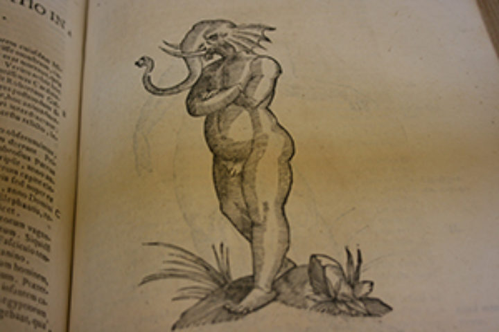 early modern fascination with rare and mythical creatures