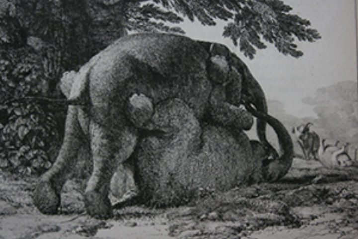 intriguing image of two elephants